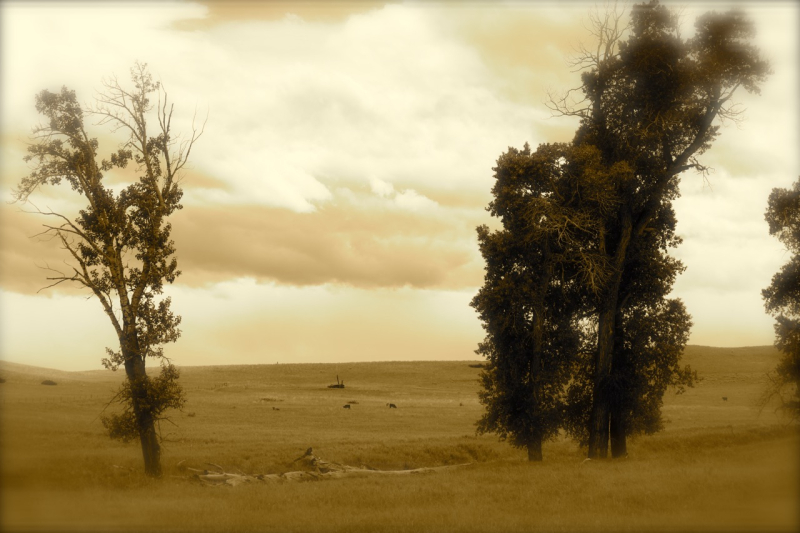 TippetRise13