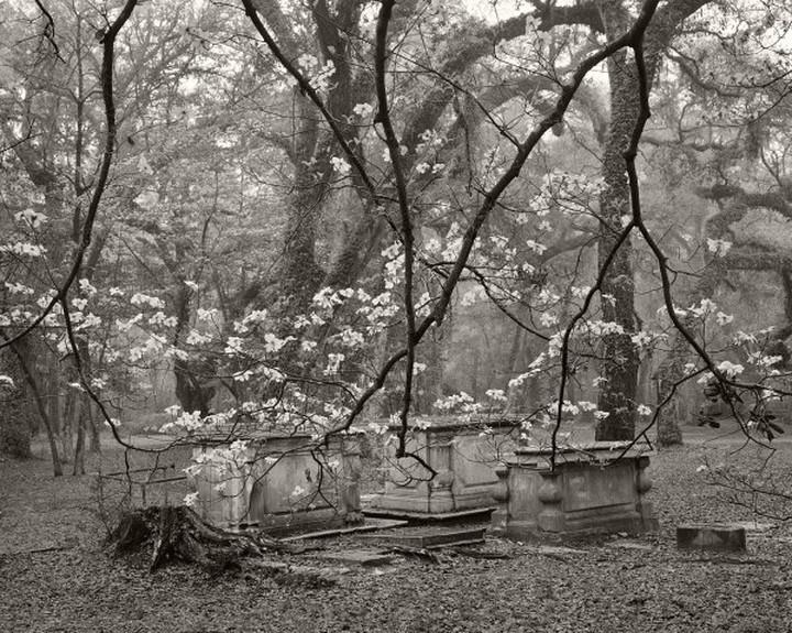 Hunterdogwoodsandgraves